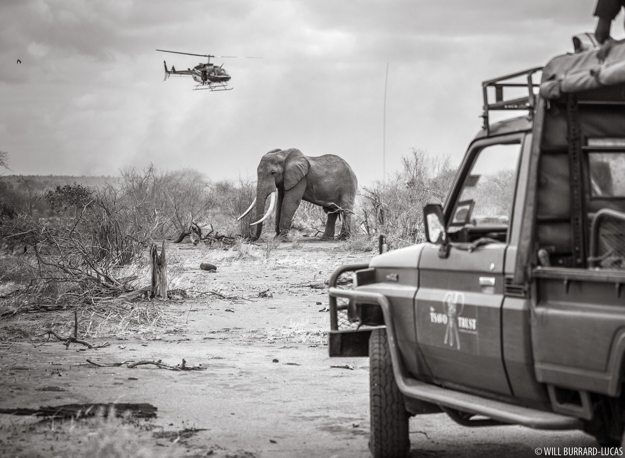 Darting an Elephant | Will Burrard-Lucas